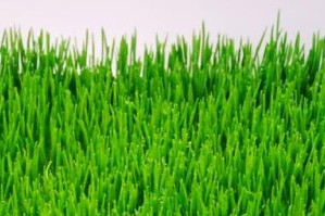 What's Up With Wheatgrass?