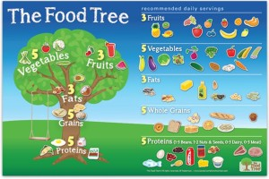 Food Tree Magnetic Boards!